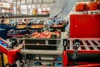 Sortowanie owoców produkcja bez znajomości języka Holandia praca od zaraz Rotterdam