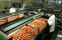 Oferta pracy w Holandii od zaraz bez języka dla studentów pakowanie warzyw