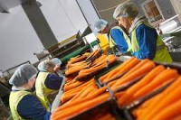 Oferta pracy w Niemczech Bremen od zaraz bez języka pakowanie warzyw