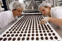 Bez znajomości języka dam pracę w Holandii na produkcji czekolady