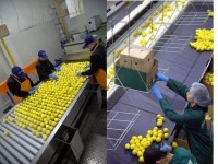 Od zaraz praca Norwegia bez języka Sandefjord produkcja sortowanie owoców