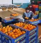 Od zaraz praca w Danii bez języka przy sortowaniu owoców Odense