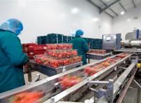 Oferta pracy w Niemczech bez znajomości języka od zaraz Kolonia pakowanie owoców i warzyw