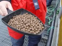 Praca w Norwegii od zaraz bez języka na produkcji karmy rybnej Kopervik