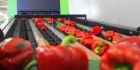 Pakowanie owoców i warzyw praca w Niemczech od zaraz bez języka Worms